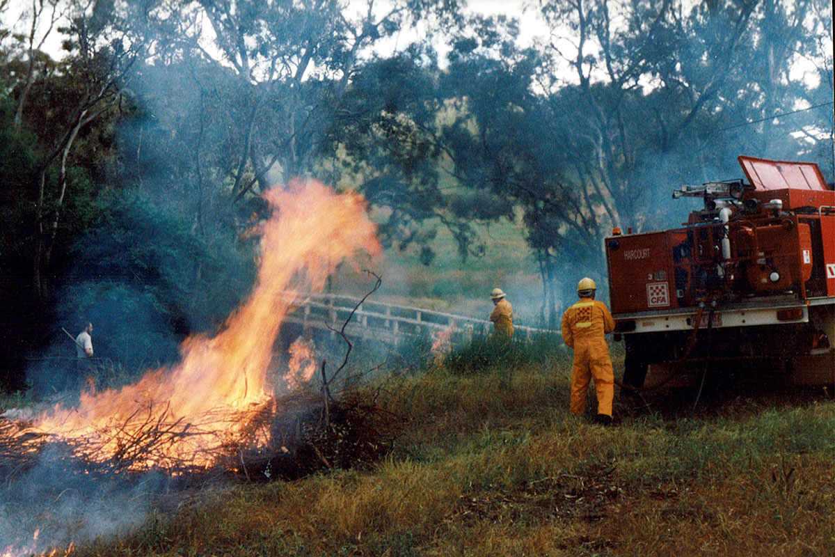 Harcourt CFA burning broom in McManus Road Reserve