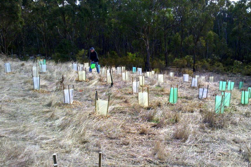 Seedlings planted in rows