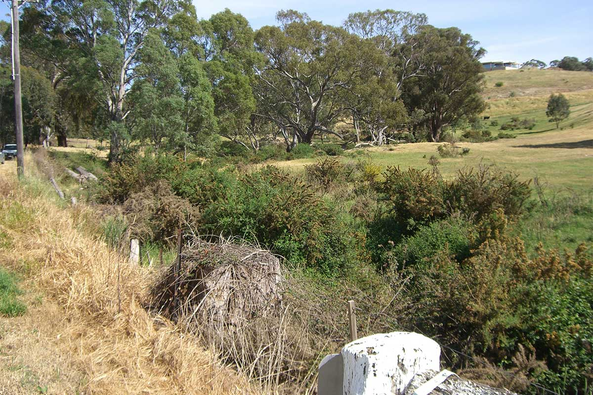 White Gum Gully chockers with weeds
